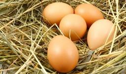 10 Eieren - 25 punten